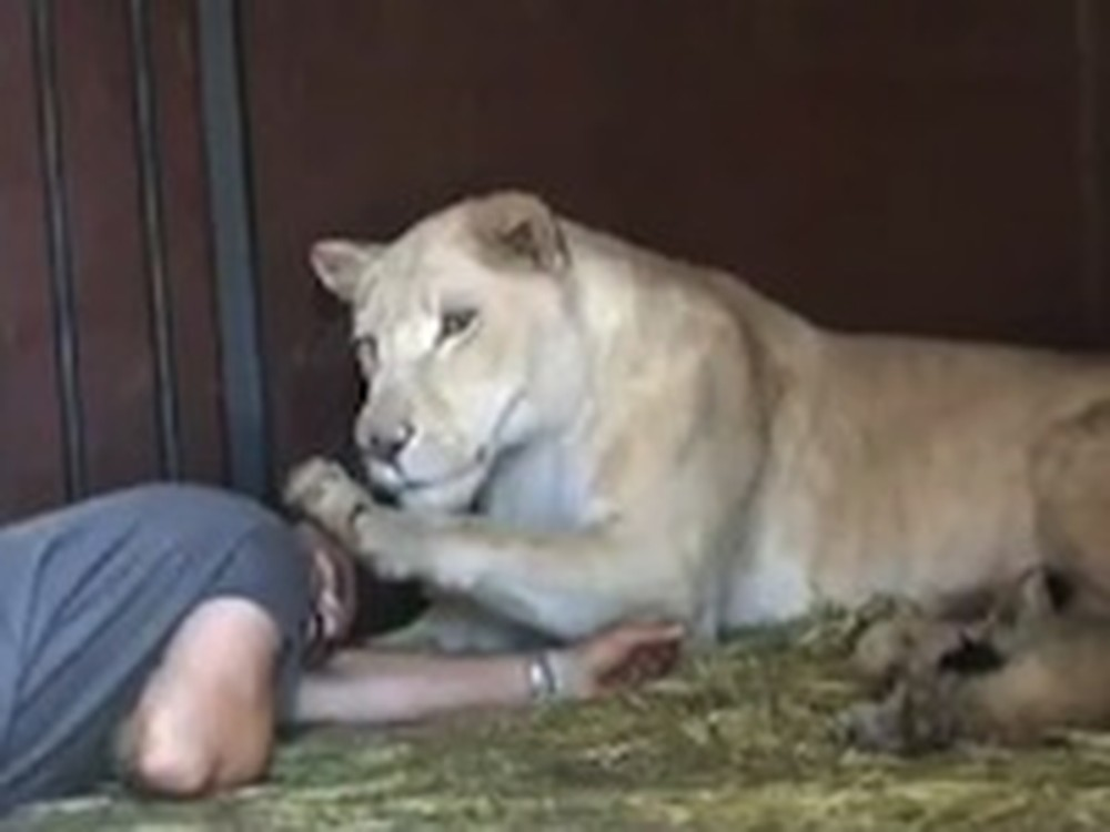 Man Takes Care of an Entire Lion Family