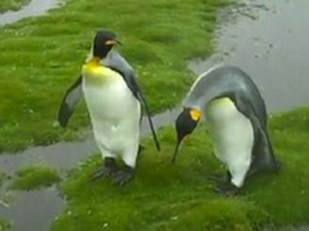 Two Penguin Friends Are Just Way Too Adorable