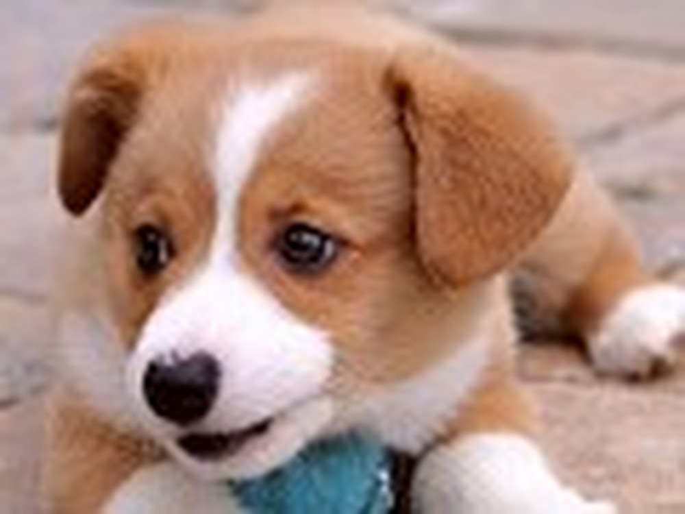 A Cute Puppy to Bring a Smile to Your Face
