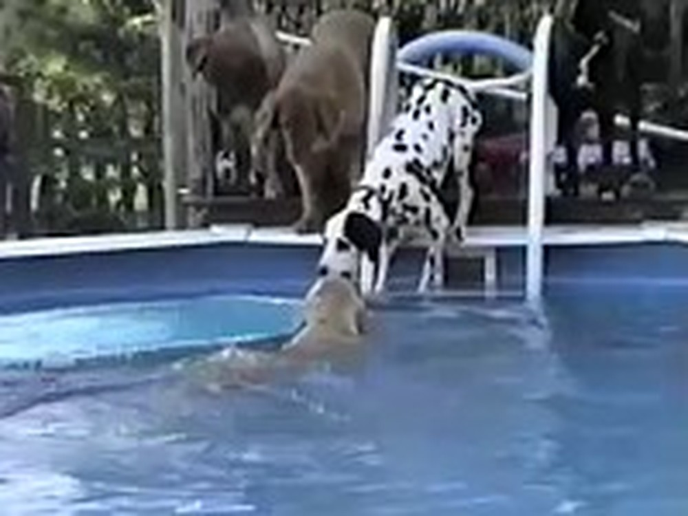 Heroic Dog Comes to the Rescue of his Friend