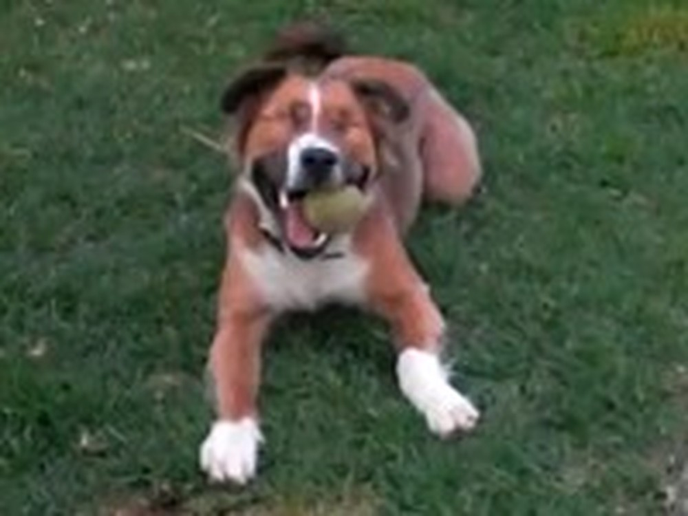 Dog Without Eyes Overcomes to Live a Happy Life