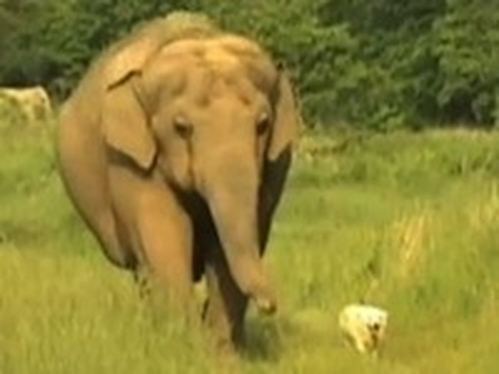 The Heart Warming Story of a Dog and an Elephant