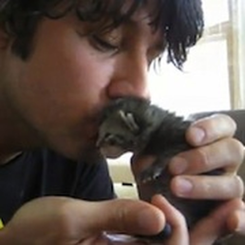 Man Finds a Kitten in the Trash and Rescues It