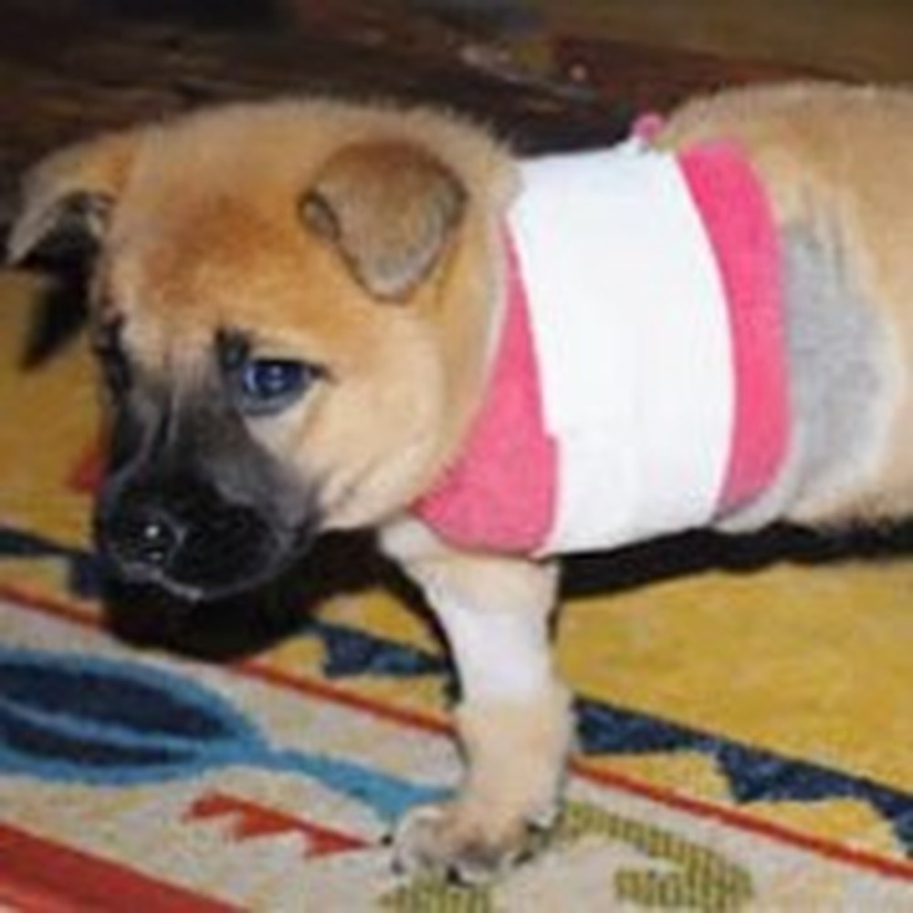 Meet Nixon the Three Legged Miracle Puppy