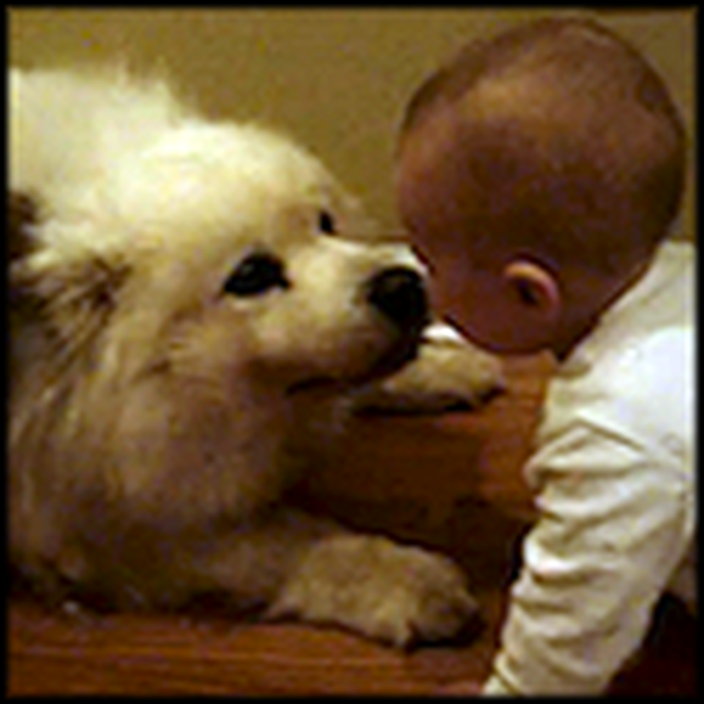 An Adorable Moment Between a Baby and a Loving Doggy