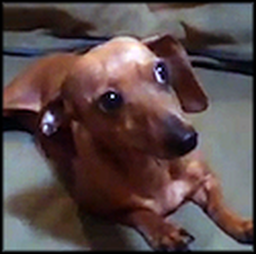 Roxy the Dachshund and her Creativity Will Warm Your Heart