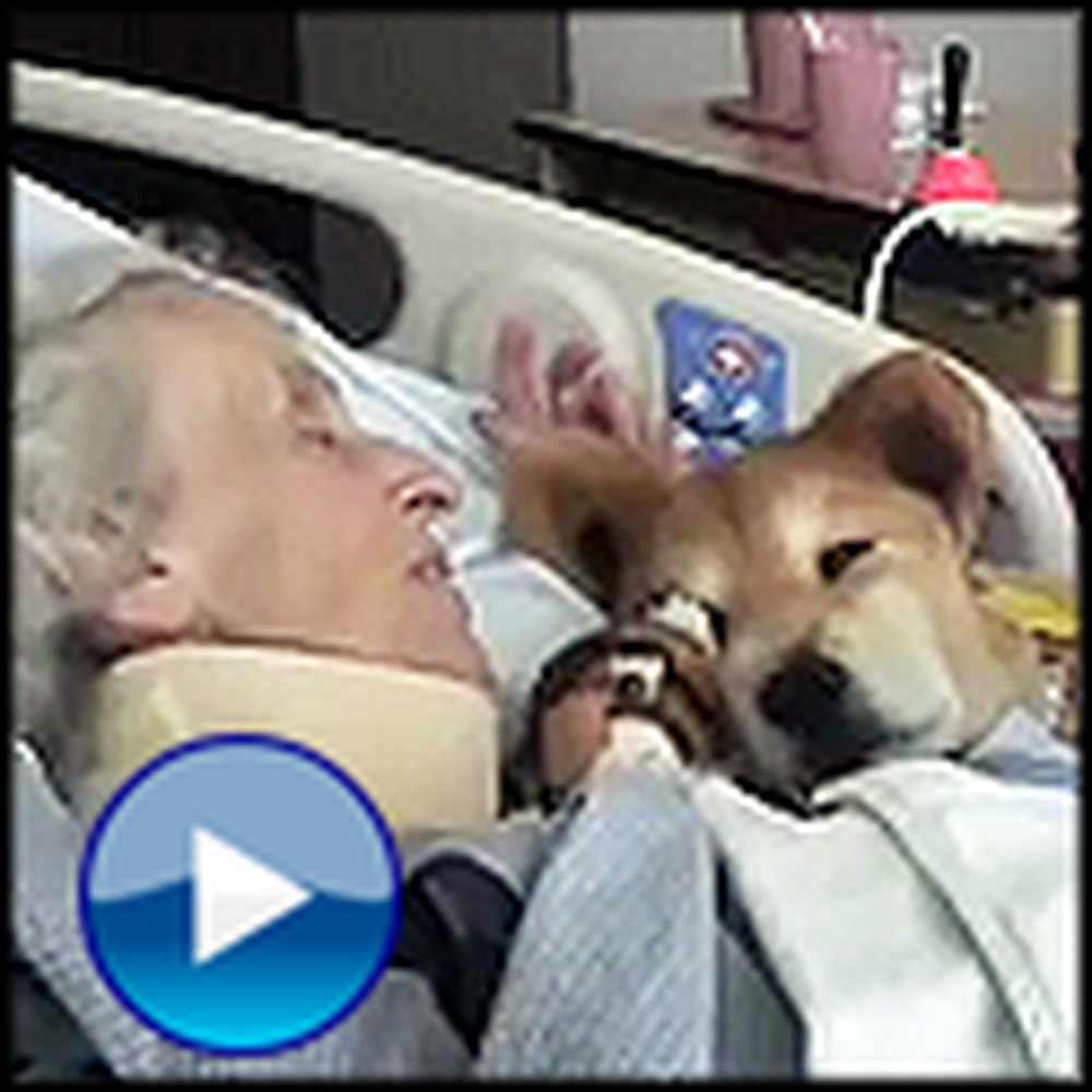 19 Year Old Therapy Dog Gives Meaning to a Dying Woman