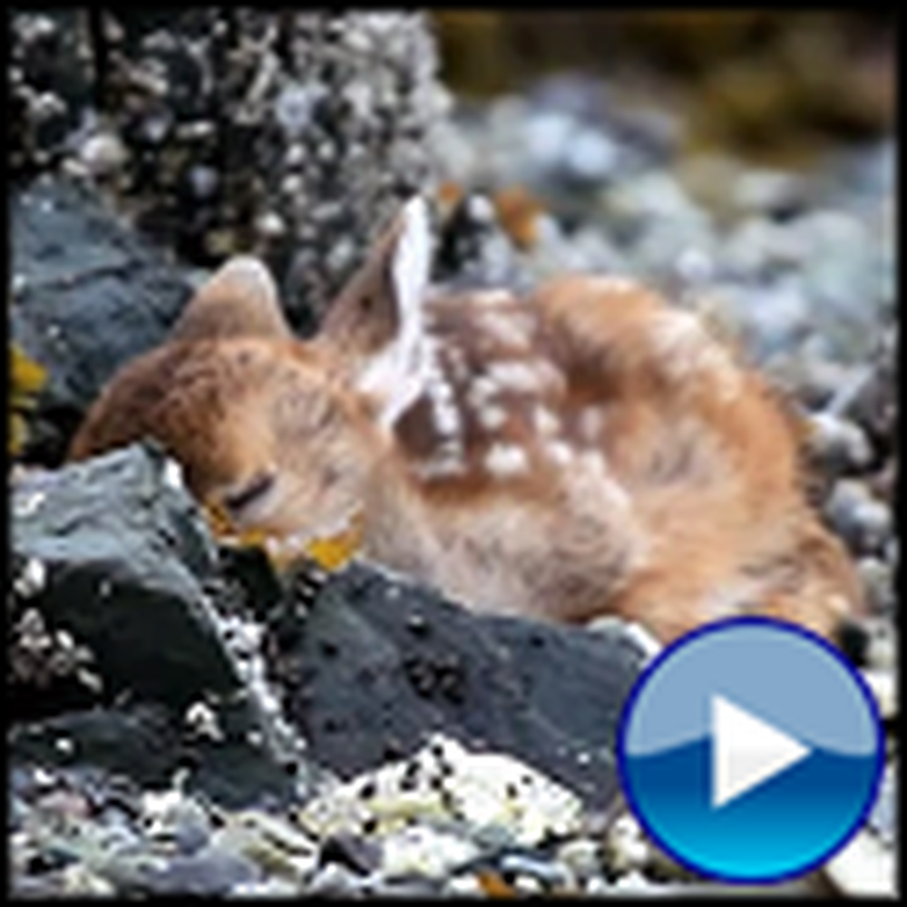 The Beautiful Miracle of Life - a Newborn Deer You'll Fall in Love With