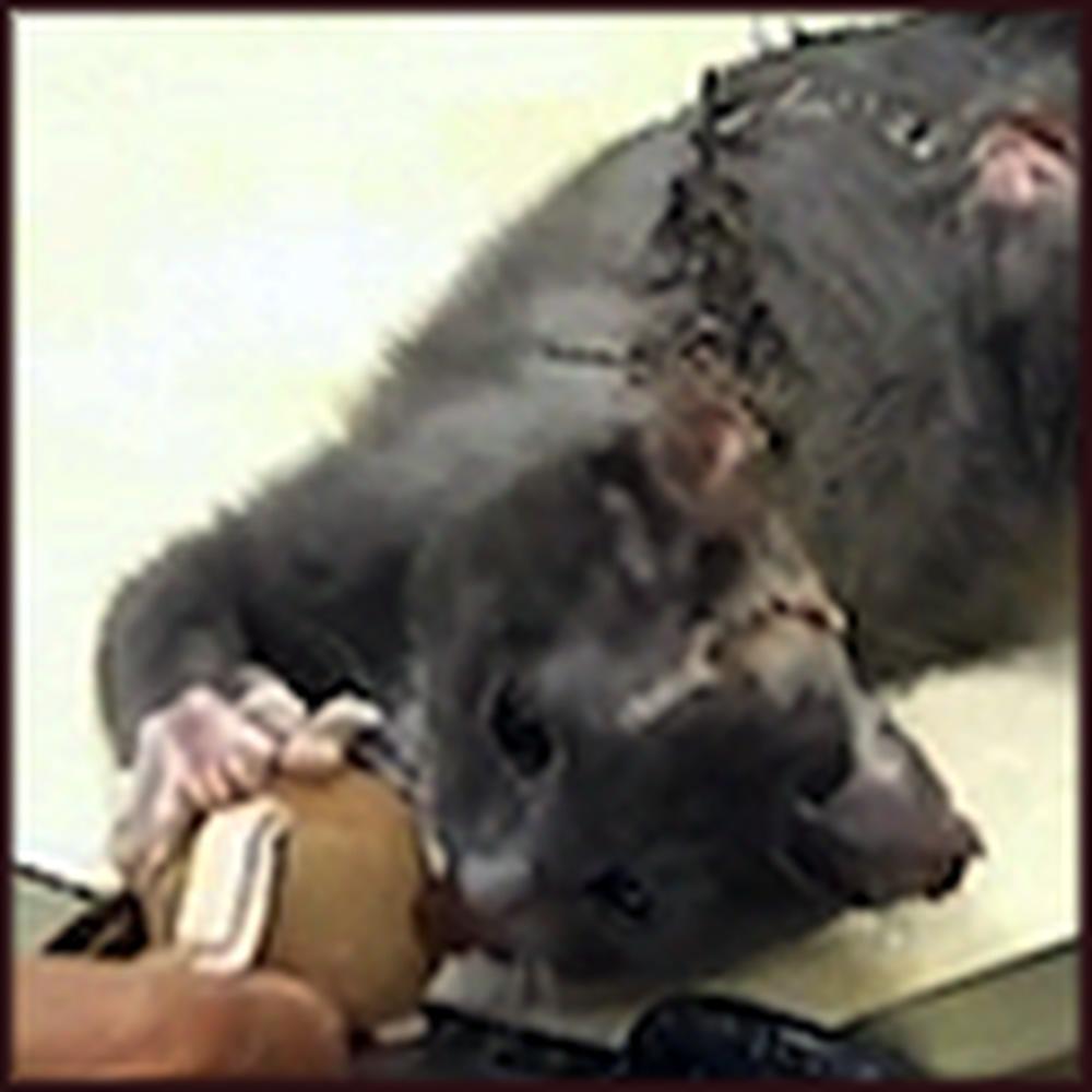 Iraq War Veteran Rescues a Tortured Cat