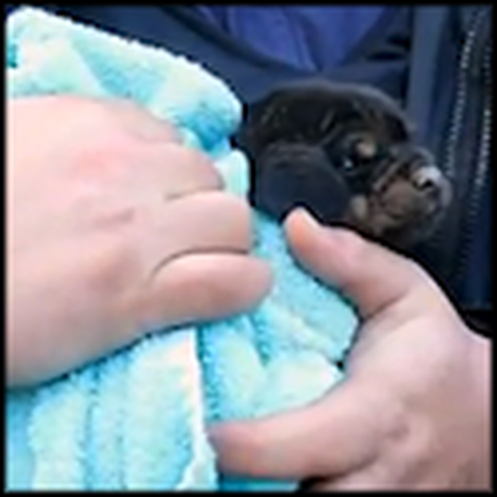 Kind Volunteers Save a Puppy From an Unbelievable Place