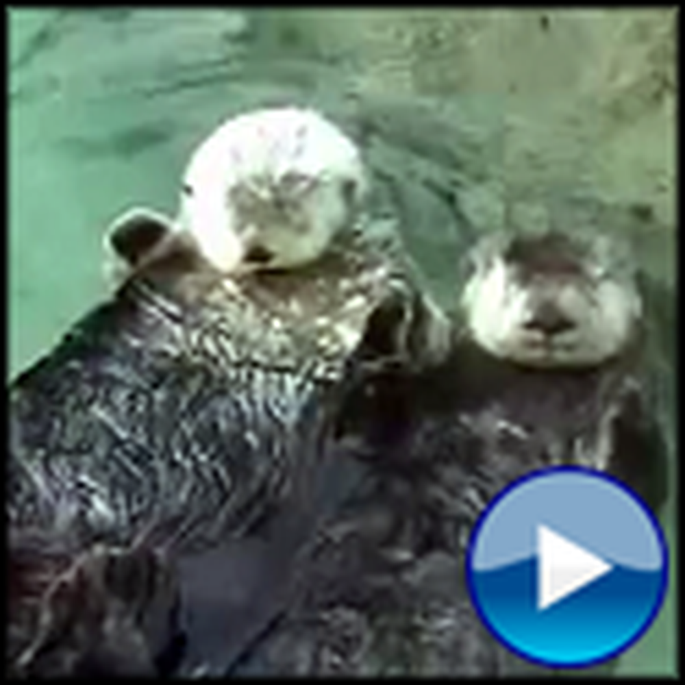 Two Otters Holding Hands are Otterly Adorable