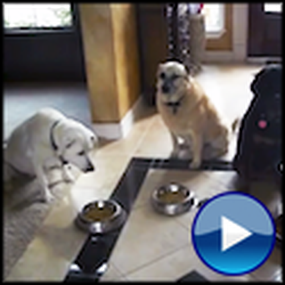 Three Dogs Pray Before Their Meal - Sooo Cute