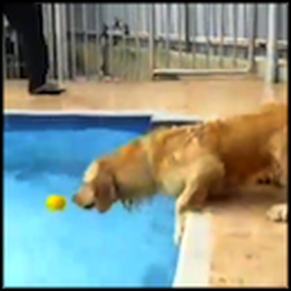 How a Smart Dog Gets his Ball From the Pool - So Cute