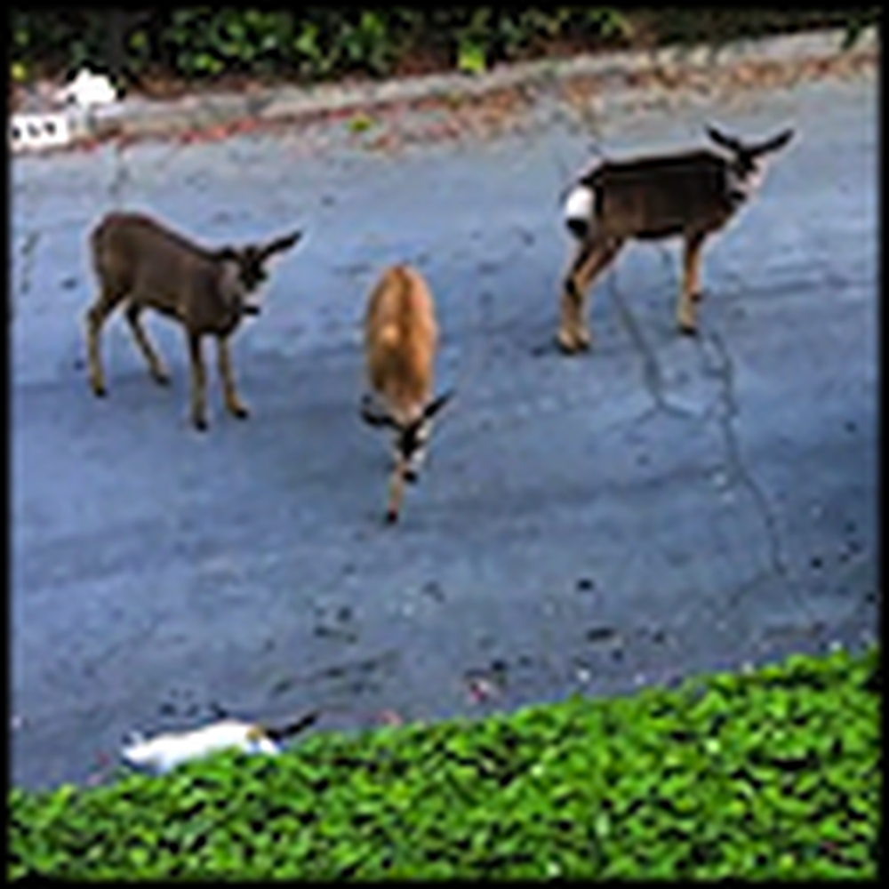 Bizarre and Interesting Meeting Between Deer and a Cat