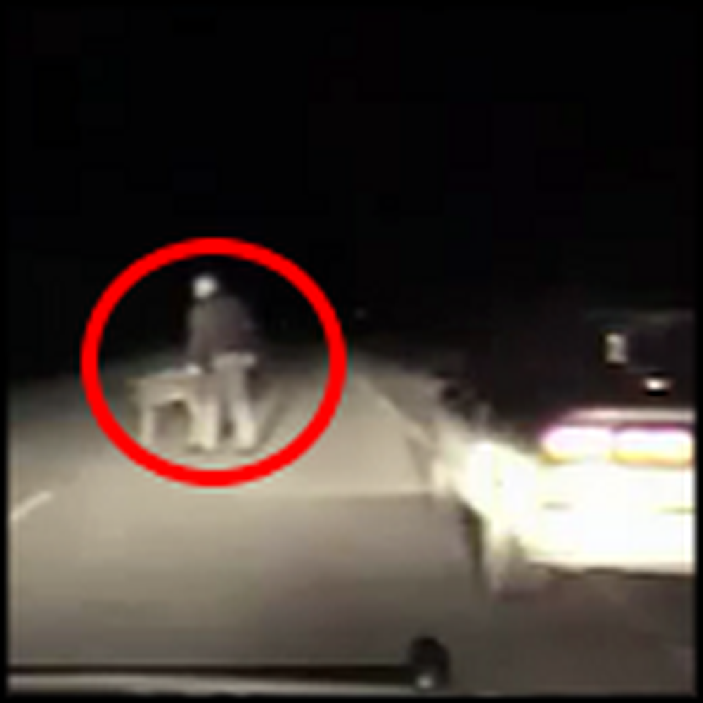 Police Officer Helps a Frightened Deer - So Heartwarming