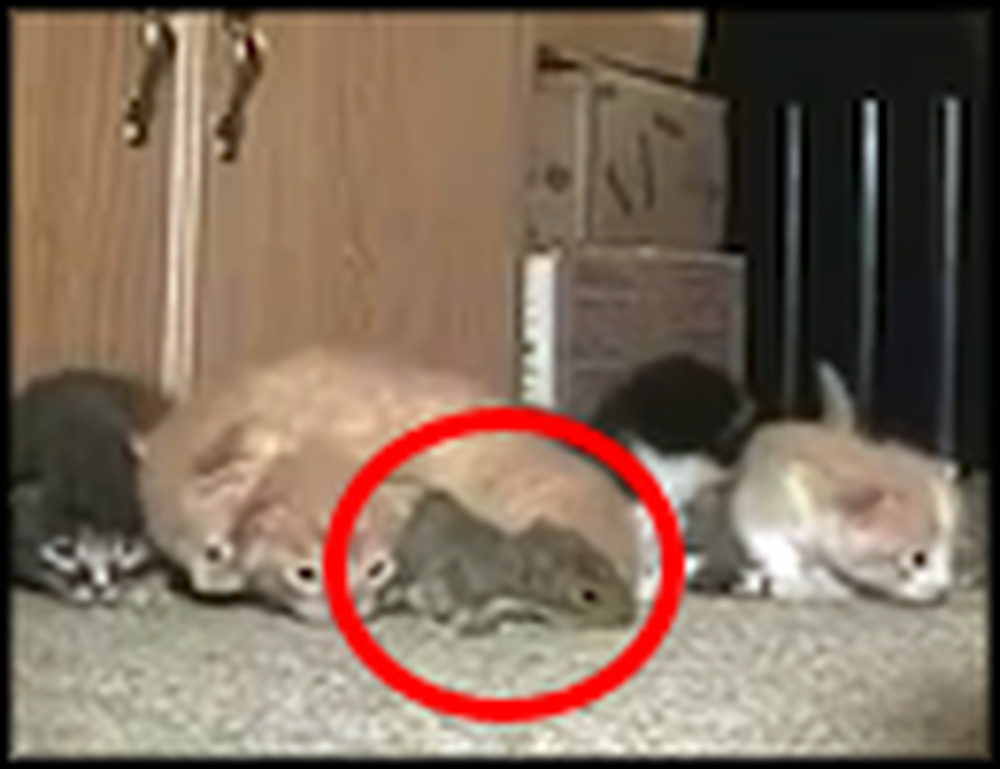 Mommy Cat Takes Care of the Most Unlikely Homeless Animal