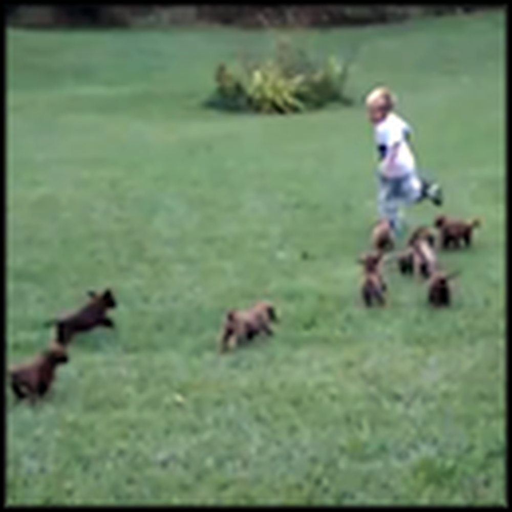 Gang of Puppies Chase the Happiest Boy in the World