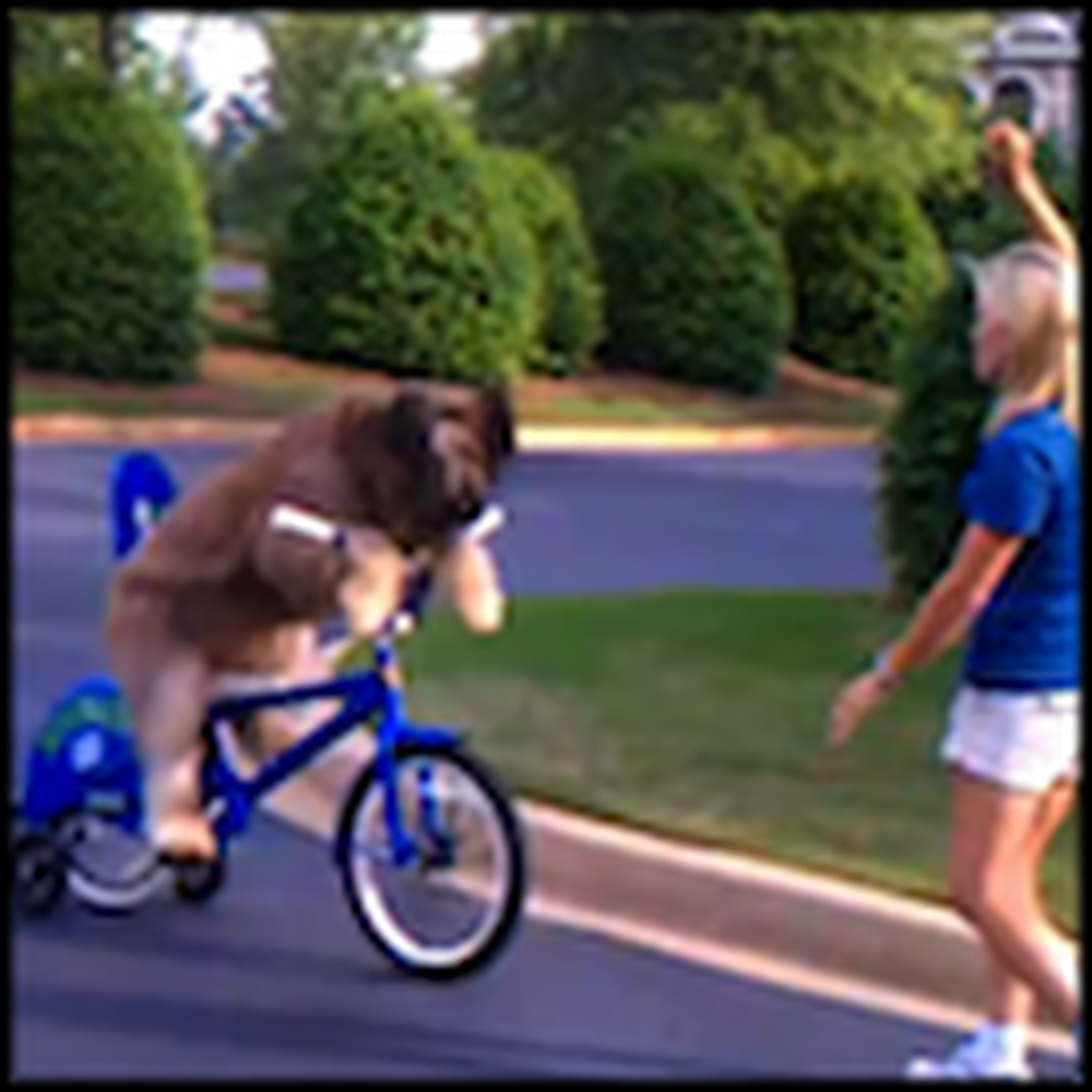 Big Cute Dog Rides a Bike for his Owner