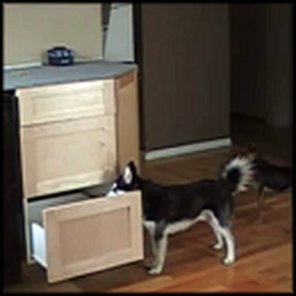 Watch How This Smart Dog Creatively Gets on the Counter