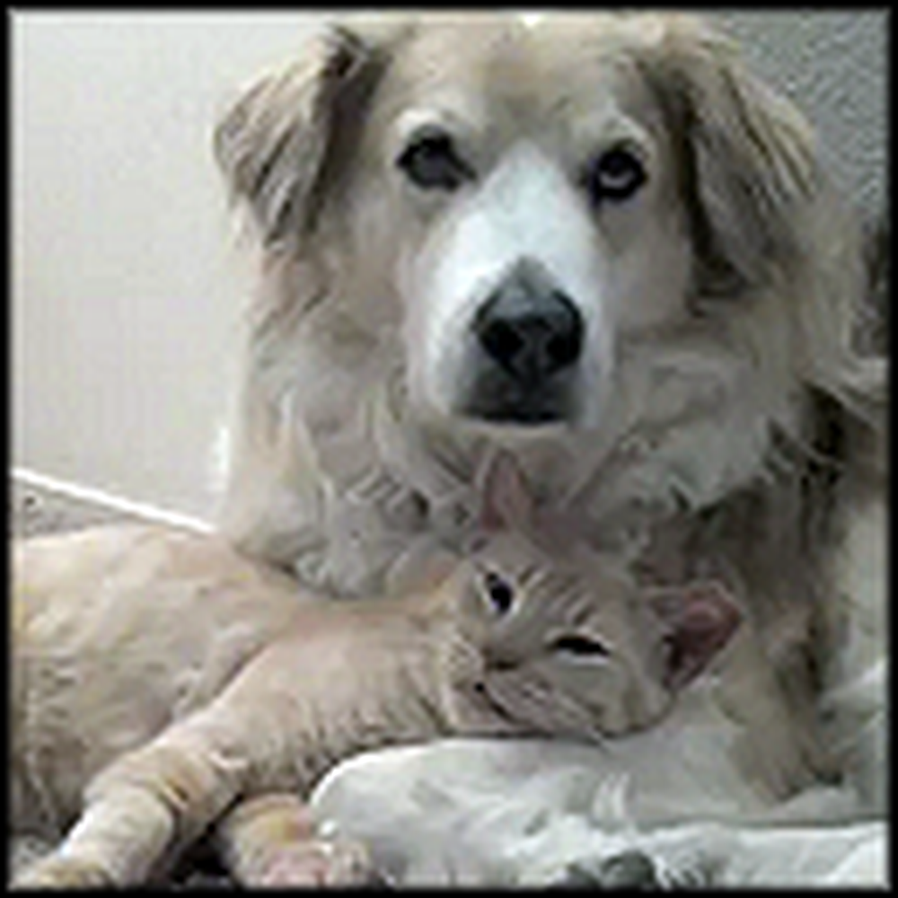 Doggy and Kitty Snuggle and Love Each Other