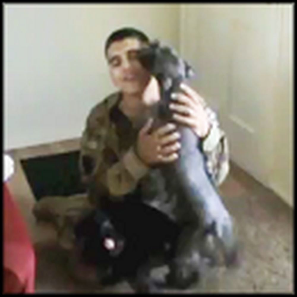 Two Schnauzers Joyfully Welcome Home Their Dad