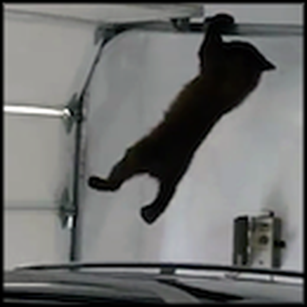 Mama Bear Rescues her Cub From a Garage - Wait Til You See How