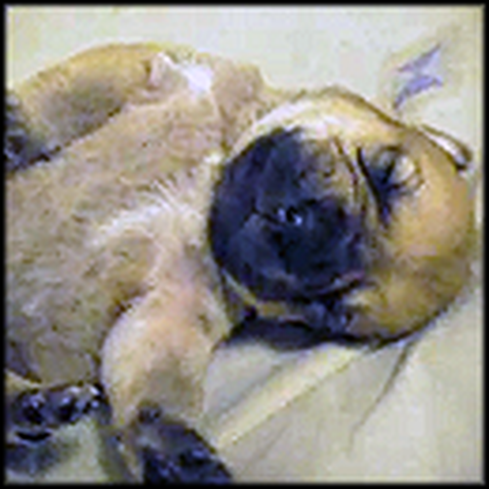 Adorable Puppy Wakes Up From a Dream - So Cute