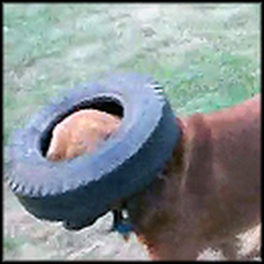 Hilarious Dog Plays Fetch with a Tire - LOL