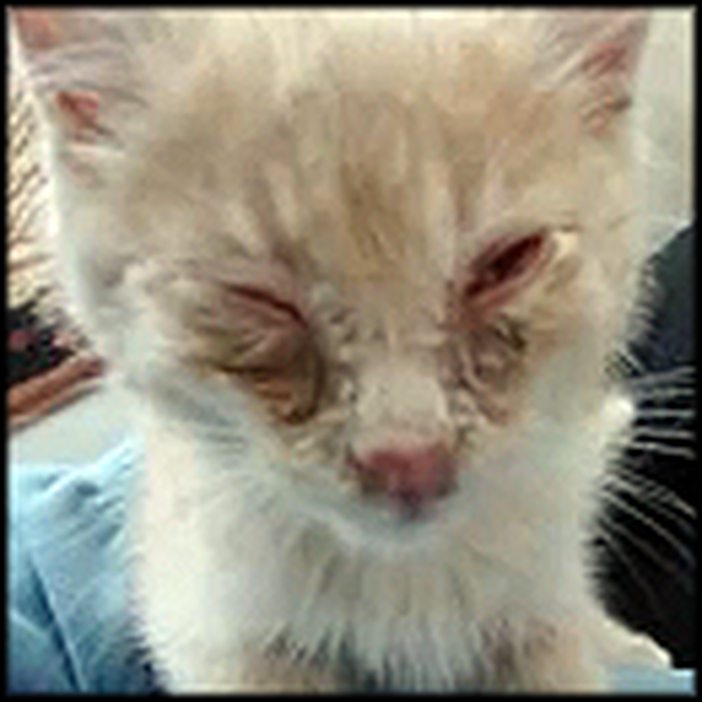 Beautiful Rescue of a Kitten Found Alone Crying in the Snow