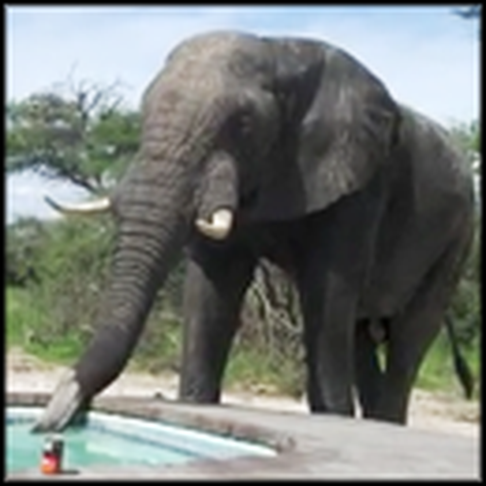 Pool Party Gets the Most Unexpected Visitor Ever
