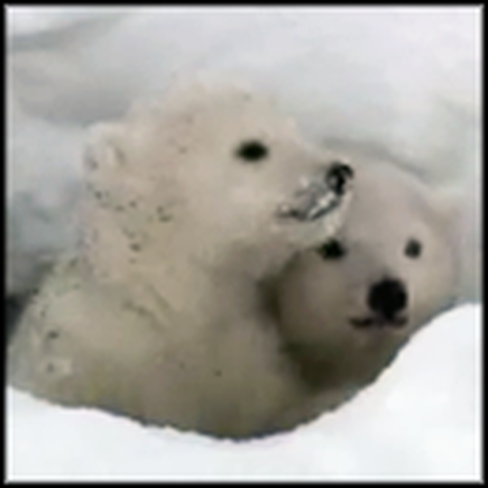 Baby Polar Bears See Daylight for the First Time