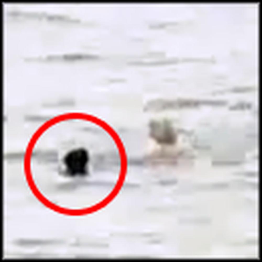CCTV Captures 46 Year Old Man Saving a Drowning Boy