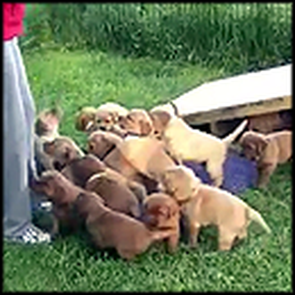A 16-Puppy Invasion of Cuteness Will Make Anyone Smile