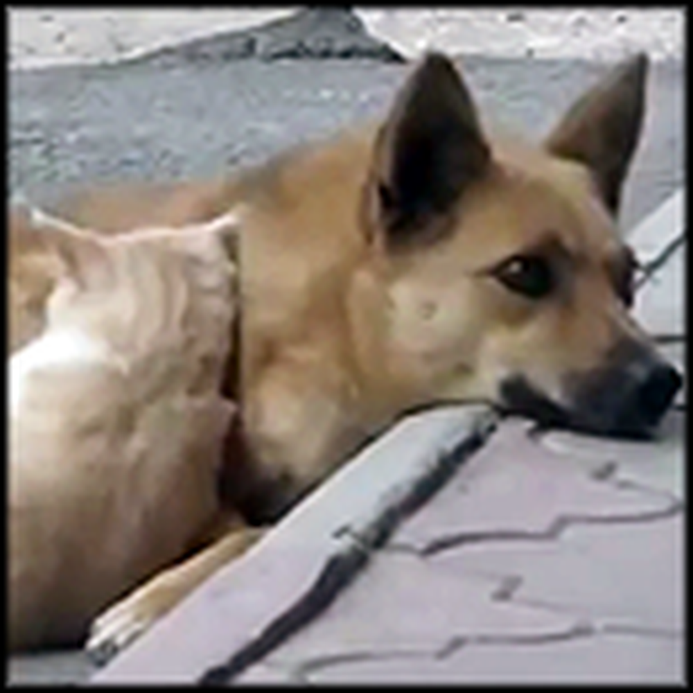 Two Adorable Strays That are Best Friends