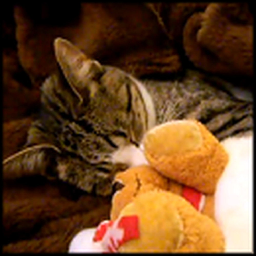 Adorable Kitty and Her Toy Take a Nap