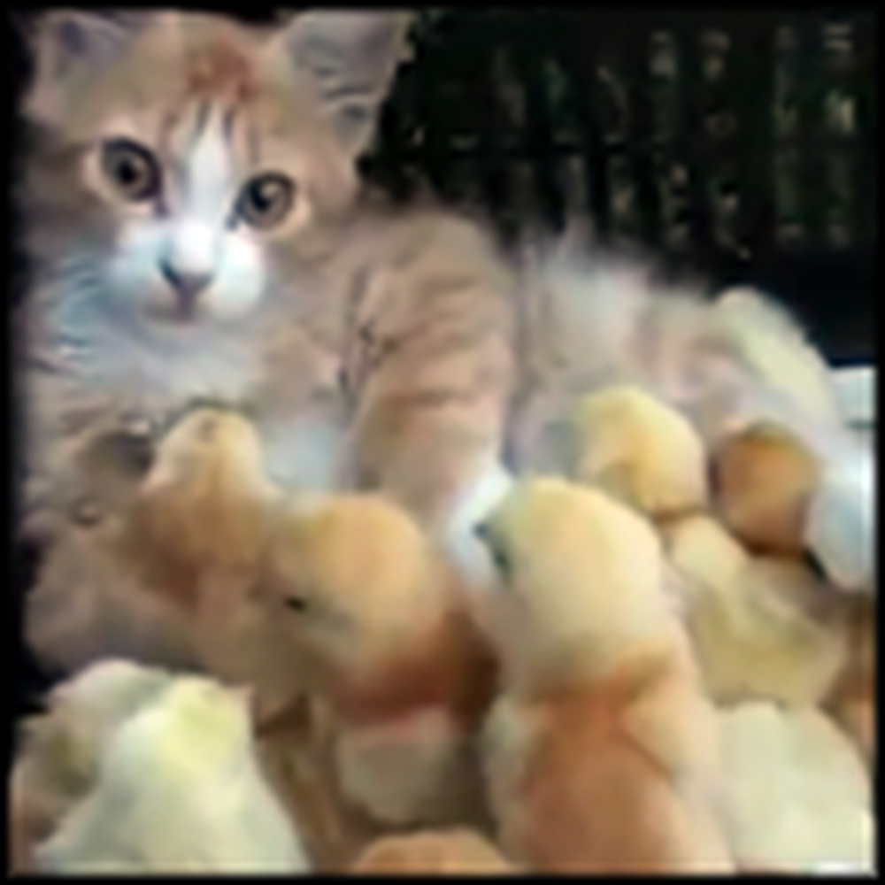 Meet the Kitty That is Loved By a Flock of Chicks