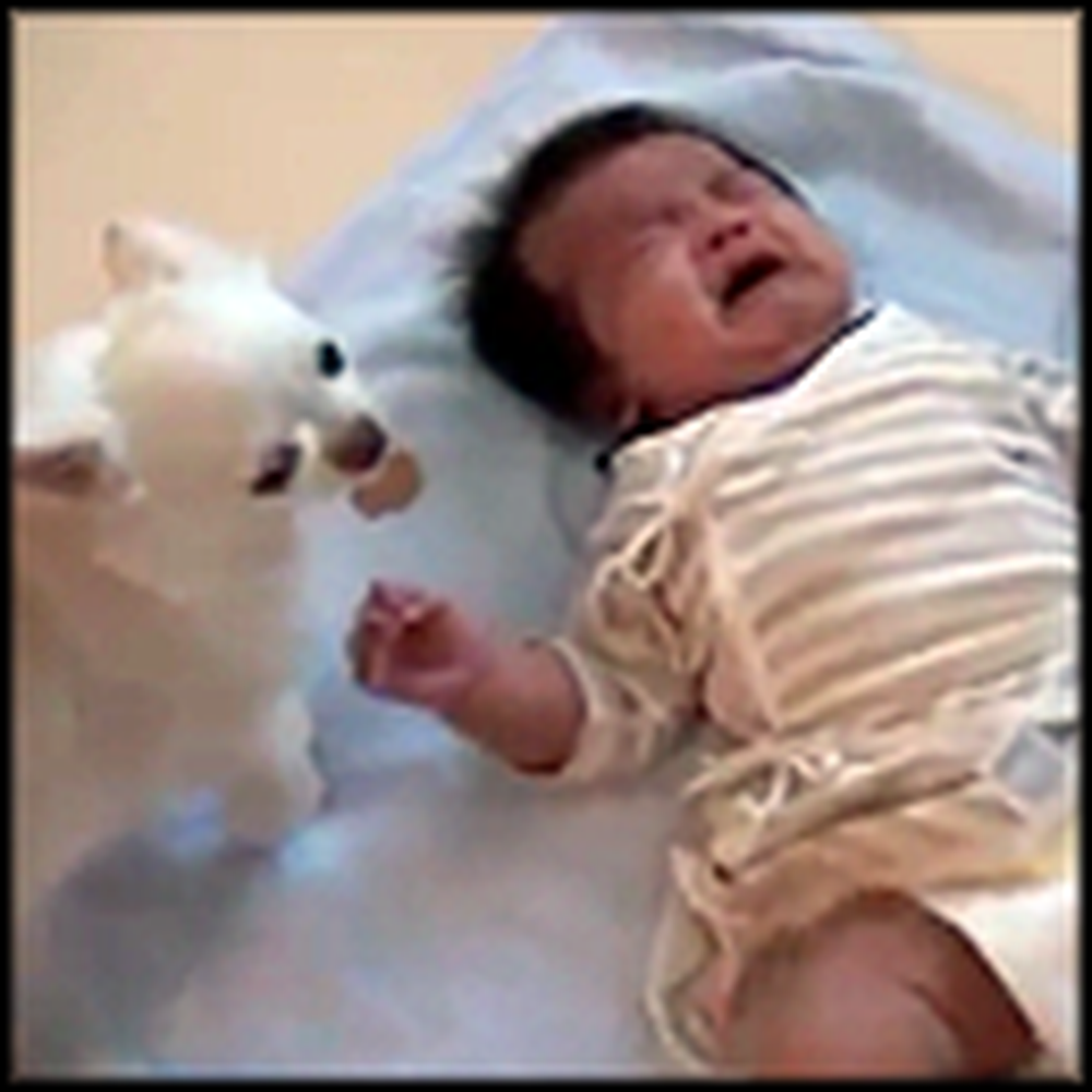 Caring Dog Tries to Comfort a Crying Baby with a Cookie