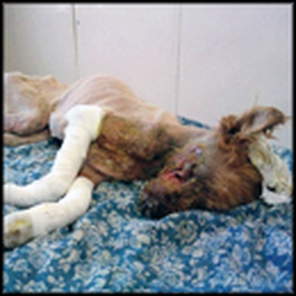 They Found This Dog With a Mutilated Face - But Watch What Happens Next