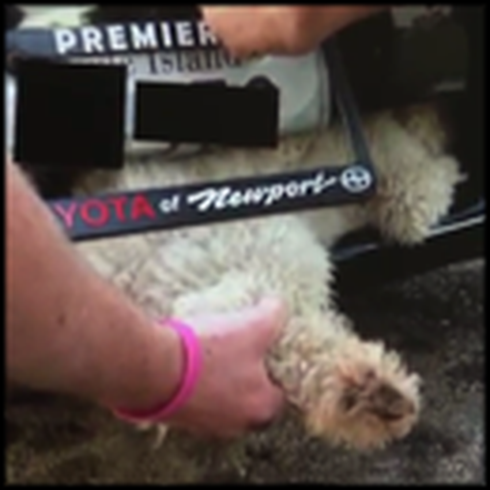 Dog Survives in the Grill of a Car for Miles - a Miracle