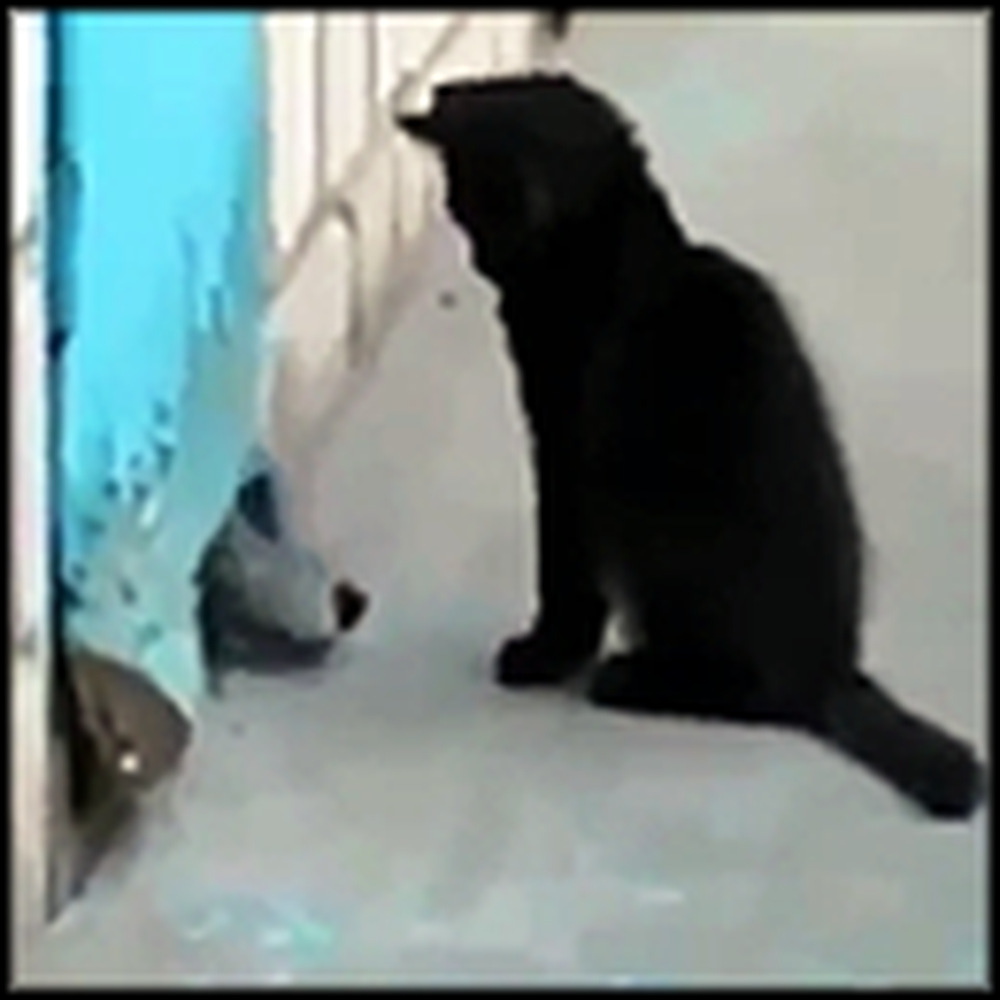 Clever Kitten Saves her Doggy Friend Stuck in a Building