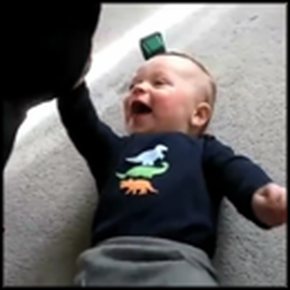 The Best Compilation Video of Babies and Dogs
