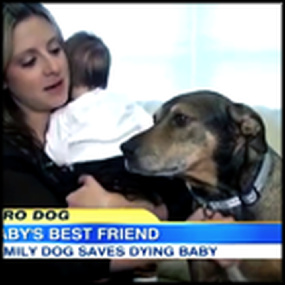 A Dying Baby is Saved by a Dog the Family Rescued