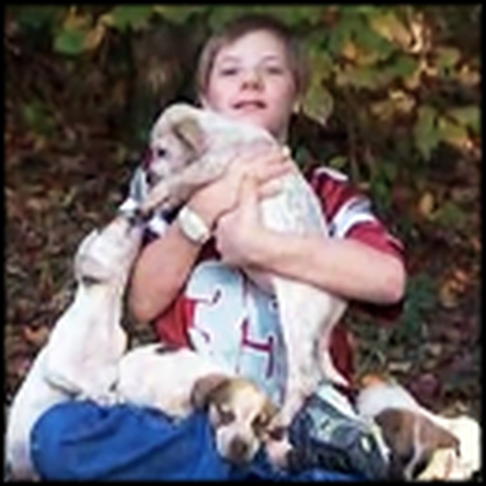 These Puppies Saved the Life of a Little Boy - Wow