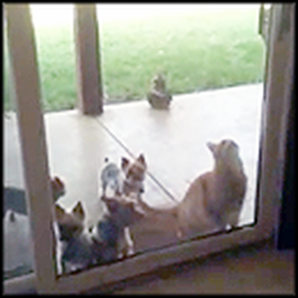Smart Cat Helps Out his Puppy Friends in the Craziest Way
