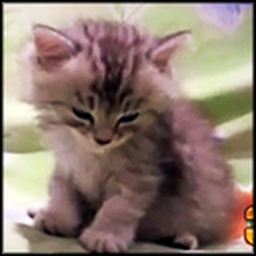 Top 10 Cutest Kitty Moments on The Internet