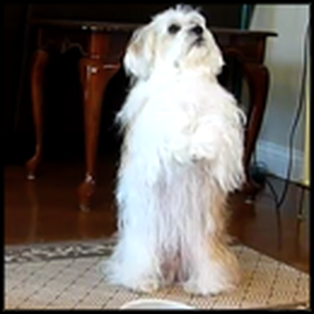 Adorable Christian Dogs Say Grace Before Meal