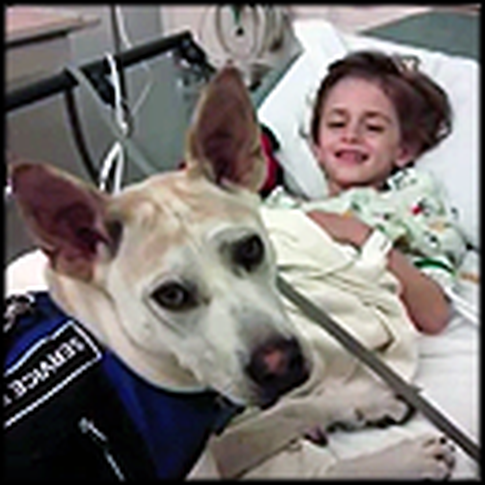 Dog Scheduled to Die Became the Guardian Angel of a Special Little Boy