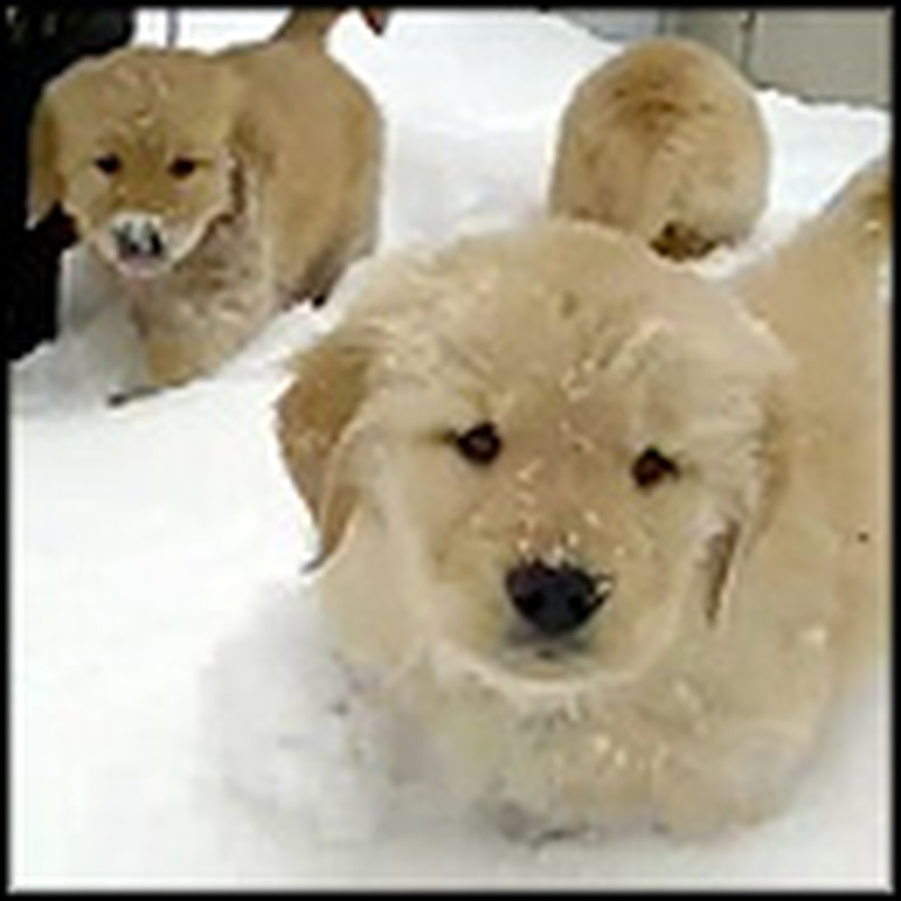 Fluffy Puppies Play in Snow for the First Time