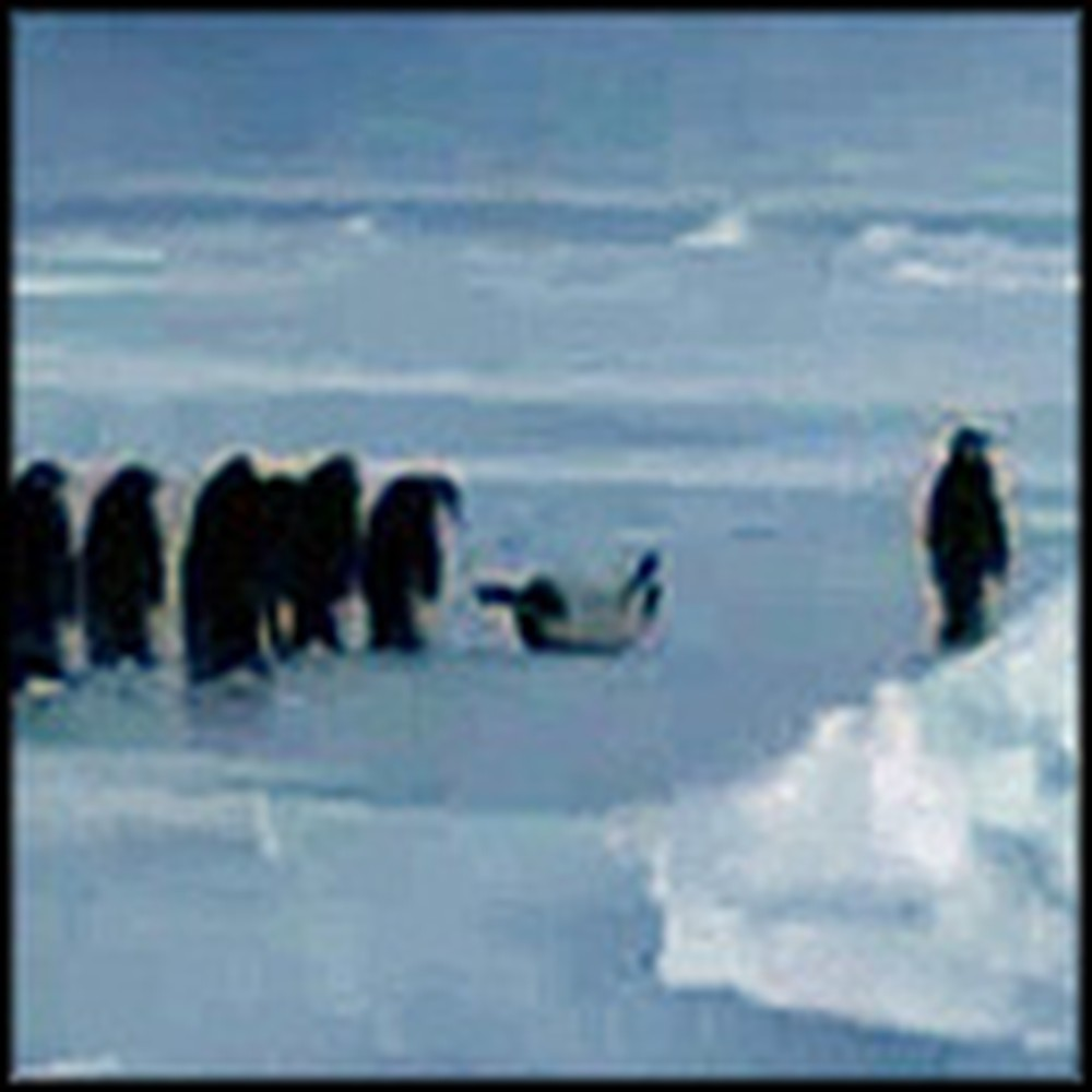 Group of Cute Penguins Do Something Awesomely Human