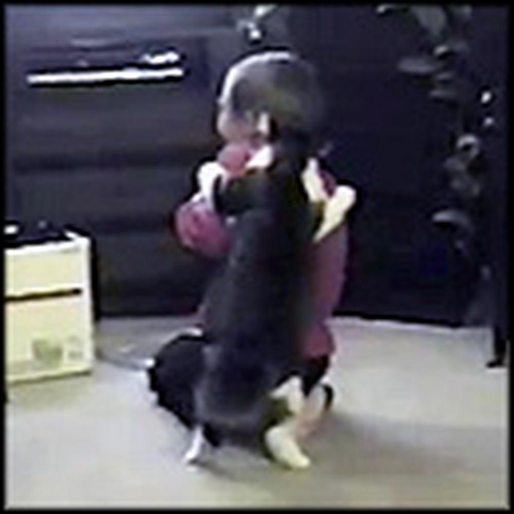 Cute Playful Cat Wrestles his Best Friend